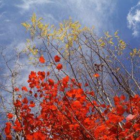 La nuova Strategia Forestale Nazionale, l'ennesima occasione persa per rivedere un sistema allo sbando