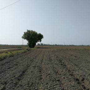 """La difesa del suolo grazie ad una petizione europea: """"Cambiamo insieme le priorità per il Sud Est Milano"""""""