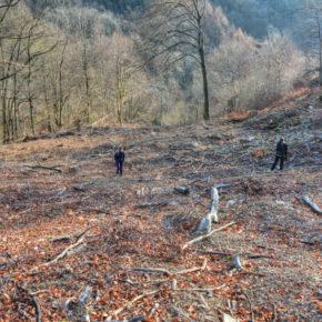 La bellezza del bosco (di faggi) e la necessità di proteggerla