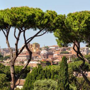 A Roma i cittadini combattono contro la cocciniglia tartaruga