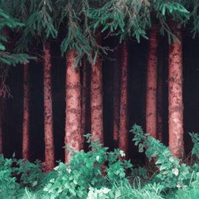 Piantare mille miliardi di alberi: si può fare? E sarebbe risolutivo?